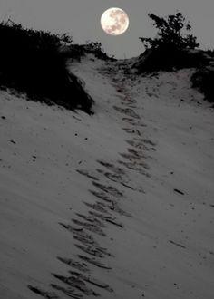 footprints in beach sand.love the beach when there is a full moon Moon Dance, Shoot The Moon, Sun Moon Stars, Good Night Moon, Moon Magic, Beautiful Moon, Beautiful Beaches, Foto Art, Over The Moon