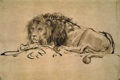 Page: Lion Resting Artist: Rembrandt Start Date: 1650 Completion Date:1652 Style: Baroque Genre: animal painting Technique: ink Material: paper Gallery: Musée du Louvre, Paris, France