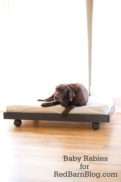Recycle old crib mattress for a big dog, plus 25 DIY Pet Bed Ideas Diy Pet, Diy Dog Bed, Palette Dog Bed, Diy Mattress, Old Cribs, Dog Furniture, Steel Furniture, Furniture Companies, Upcycled Furniture