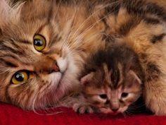 Jaarlijks raken elfduizend katten vermist