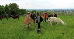 Juli/August 2016: Vegane Events in Wien und Niederösterreich. Wie ihr vielleicht schon wisst, bin ich im Zuge der Arbeit an...