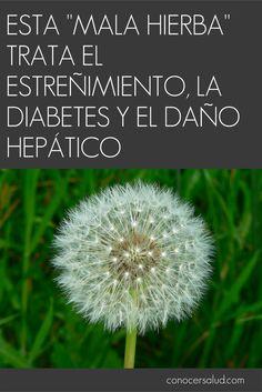 dr oz tratando la diabetes con hierbas
