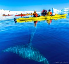 """""""We had 13 kayaks on the water, and this guy was coming up to each boat once or twice – probably within a foot of each boat – and rolling over to look at us."""""""