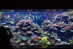 Saltwater Tank, Saltwater Aquarium, Aquarium Fish, Malawi Cichlids, Air Diffusers, Rock Cover, Home Aquarium, Coral Tank, Aquariums