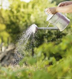 Quench your garden's thirst without driving up your water bill with these ideas for small-scale irrigation. Garden Pests, Herb Garden, Tomato Garden, Organic Gardening, Gardening Tips, Gardening Services, Vegetable Gardening, Square Foot Gardening, Urban Farming