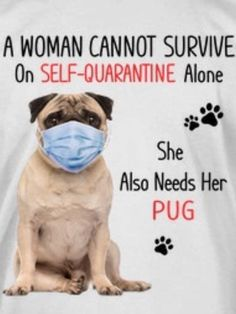 Puppy Shot Schedule, Funny Pug Videos, Pug Gifs, Animals And Pets, Cute Animals, Pug Art, Pug Puppies, Cute Pugs, Pug Love