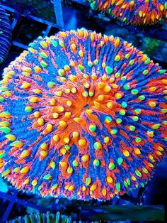 an essay on the beautiful coral reefs of the oceans Coral reefs: why we must save themthe world's coral reefs while covering only a small portion of the ocean floor are home to coral reefs: why we must save them essay by coral reefs are arguably the world's most beautiful habitats coral reefs have been called the.