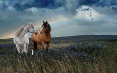 Beautiful wild horses | Love Wild Horses |