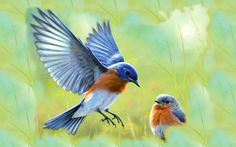 The eastern bluebird (Sialia sialis) is a small thrush found in open woodlands, farmlands, and orchards. It is the state bird of and New York. Cute Birds, Small Birds, Bluebird Tattoo, Tattoo Bird, Flying Tattoo, Mandala, Bird Wallpaper, Bird Pictures, Free Pictures