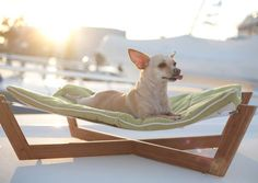 dog hammock  hammock  chair  relax bamboo hammock pet bed   bamboo crafts   pinterest   bamboo crafts      rh   pinterest