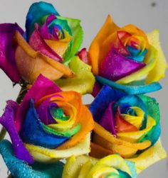 Happy Roses.  These multi-colored rainbow roses are artificially colored - much better than red roses.....order these http://www.happy-roses.com/....You can DYI by splitting the stems and put them into different color water.....