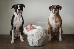 newborn portrait with dogs, baby and pet dog photo, newborn photography #chicagonewborn #newbornportraits