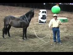 ▶ Parelli Horse Training - What Is Respect? - YouTube
