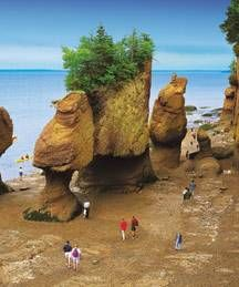 The Bay of Fundy (Canada) is renown for having the highest tides on the planet metres or 53 feet). People walking on the ocean floor at Hopewell Rocks in New Brunswick. Photo: New Brunswick Tourism and Parks Nova Scotia, Hopewell Rocks, Voyage Canada, East Coast Travel, Voyager Loin, Destinations, Indian Summer, Parcs, Canada Travel