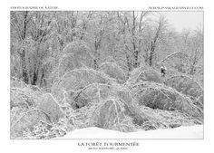 Rage, Monochrome, Canada, Snow, Outdoor, Night, Winter, Landscape, Outdoors