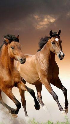 Horses – Communauté – Google+