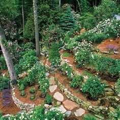 Rain and snow are going to play a huge part in your yard landscaping decisions. For example you will have to plan for your yard landscaping with care. Terraced Landscaping, Terraced Backyard, Landscaping On A Hill, Landscaping With Rocks, Landscaping Ideas, Steep Hillside Landscaping, Outdoor Landscaping, Terraced House, Shade Landscaping