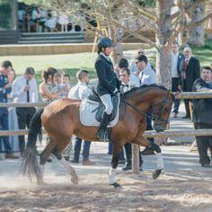 Horses, Animals, Homestead, Animales, Animaux, Animal, Animais, Horse