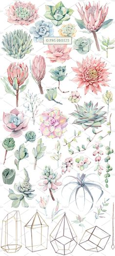 """I""""ve been in love with succulents long ago. It's a pleasure to paint them. I know that you also love succulents:) My new set is Succulents Drawing, Watercolor Succulents, Watercolor Flowers, Watercolor Ideas, Watercolor Illustration, Watercolour Painting, Painting & Drawing, Cactus Plante, Plant Drawing"""