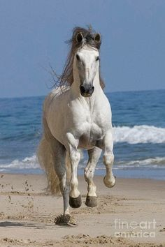 Aww reminds me of riding my boy on beach !