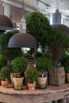 : I Adore Outsides: Zetas Trädgård Garden Shop, Garden Pots, Vegetable Garden, Garden Center Displays, Chinese Garden, Garden Styles, Garden Inspiration, Houseplants, Container Gardening