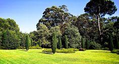 Verdure omniprésente dans le parc Serralves, à Porto, au Portugal