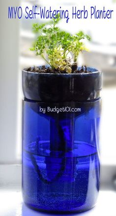 This is so cool.  It would be a kitchen window herb garden!  Budget101.com - - MYO Glass Self Watering Planter | wine bottle Planter