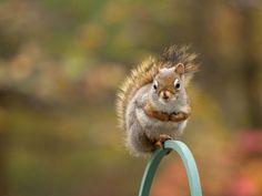 adrable squirrels