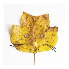 Tulip Tree Leaf Cat, Photographic Print