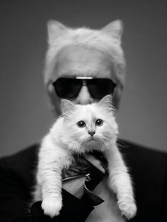 Fashion's favorite feline Choupette, kitty to  Karl Lagerfeld