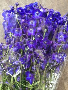 Delphinium 'Atlantis'. Sold in bunches of 10 stems from the Flowermonger the wholesale floral home delivery service.