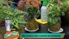 Kokedamas – Mis Jardines Bonsai, Flower Pots, Diy And Crafts, Cactus, Herbs, Gardening, Women's Fashion, Boho, Ideas