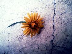 Flower   WalterCiacci2014©