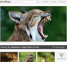 It's my Blog » Pixabay: des images de bonnes qualité en utilisation libre