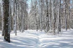 Avril ciel bleu dans le bosquet de bouleaux belle photo