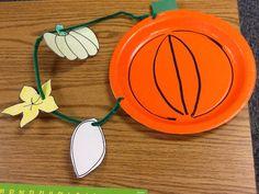 "Pumpkin Life Cycle Extension - Mrs. Cave's First Grade (seed, flower, green pumpkin on a ""vine"" to orange pumpkin)"