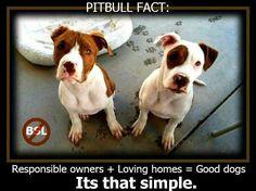 Pit bull fact: