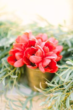 Red tulips: http://www.stylemepretty.com/little-black-book-blog/2014/12/25/lakeside-winter-wedding-inspiration/ | Photography: Mint - http://mymintphotography.com/
