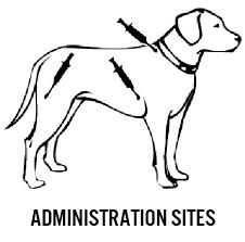 1000 images about vet on pinterest veterinarians pets
