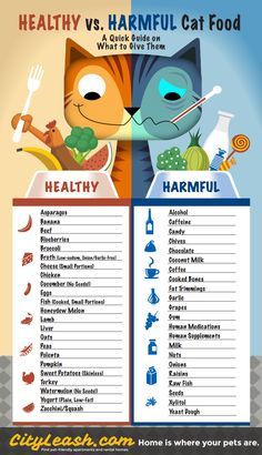 Cat Care Health Healthy Cat Treats - Can you make sure the cat food you purchase are truly healthy? While the guaranteed ones are usually pricey, let's try this solution: homemade cat treats.