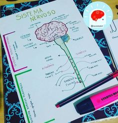 """1,026 curtidas, 11 comentários - @neurostudent (@neurostudent) no Instagram: """"E ai neuroamigos ! Vamos estudar as divisões do sistema nervoso ?!!! #neuro #neuron #medina…"""""""