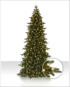 This Christmas, choose our Kennedy Fir Christmas tree and bestow a touch of royalty upon your holiday decor!