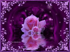 Purple Glitter Graphics | Purple Roses Wallpapers and Purple Roses Backgrounds 1 of 1