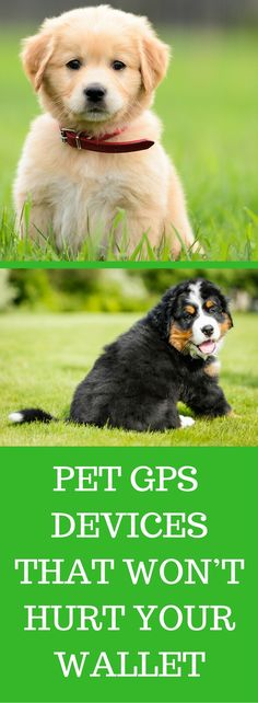 TOP 3 PET DOG GPS AND TRACKER COLLAR DEVICES THAT WON'T HURT YOUR WALLET