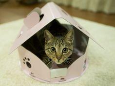 cardboard cat house 段ボールハウス