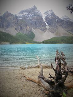 Moraine Lake Shoreline Trail. Banff. Alberta