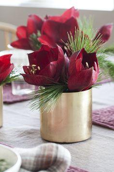 Amaryllis og silkefuru er en enkel og vakker liten dekorasjon.