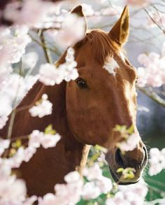 Sweet horse peeking from behind pretty pink flowers.
