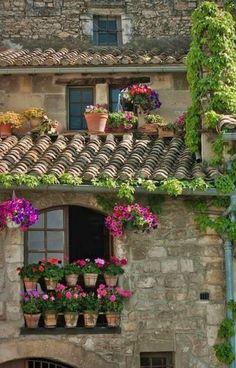 Double stacked geranium posts in window...