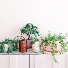 White Succulent Planter House Plants 40 Ideas For 2019 Cactus Plante, Pot Plante, Cool Plants, Green Plants, Indoor Garden, Indoor Plants, Hanging Plants, Succulents Tumblr, Plantas Indoor